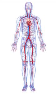 Hemoglobin in boljša prekrvavitev z Geo impulzi Bionis in Zapper Zaper Zaperino terapijo
