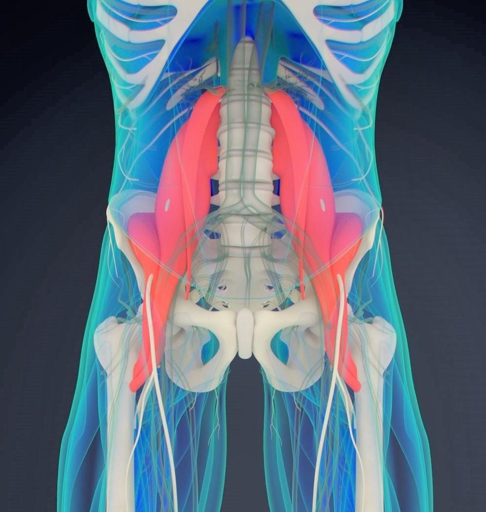 PSOAS mišice pri ledvenih bolečinah in Zapper Zaper Zaperino terapija.