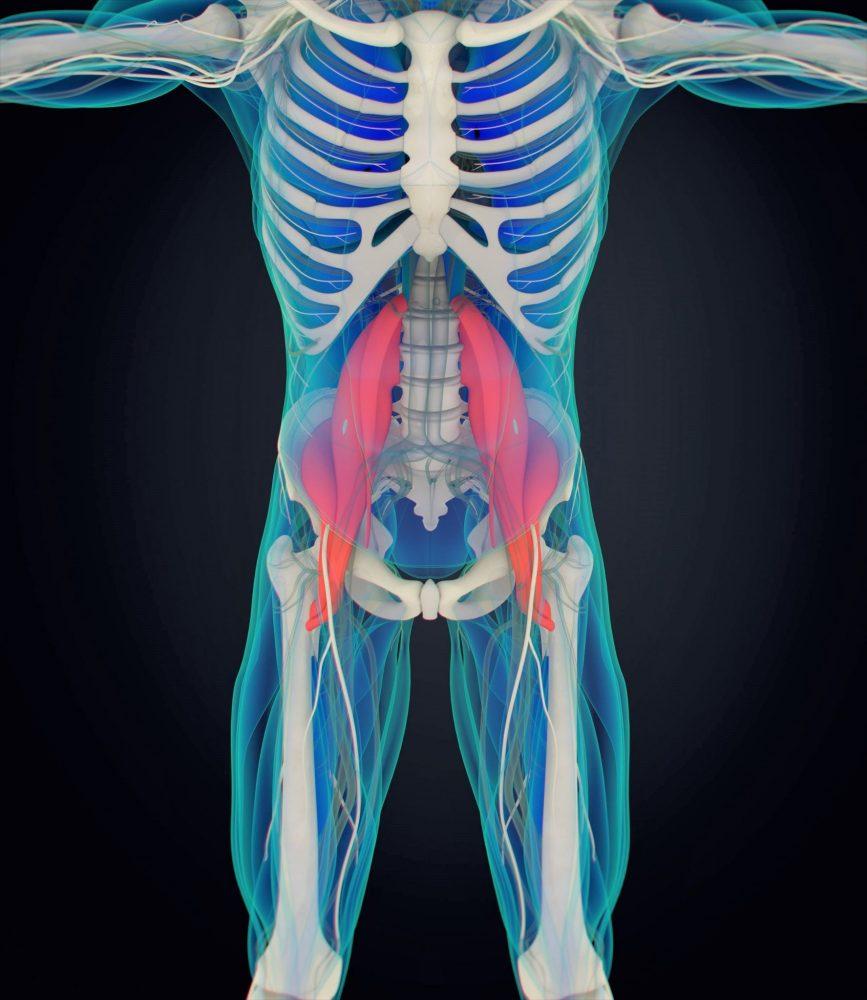 Psoas mišice bolečine v križu Zapper Zaper Zaperino