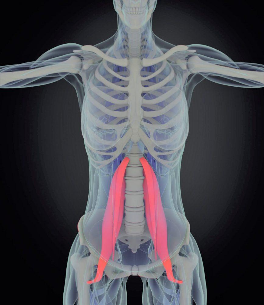 psoas mišice spredaj bolečina v križu Zapper Zaper Zaperino